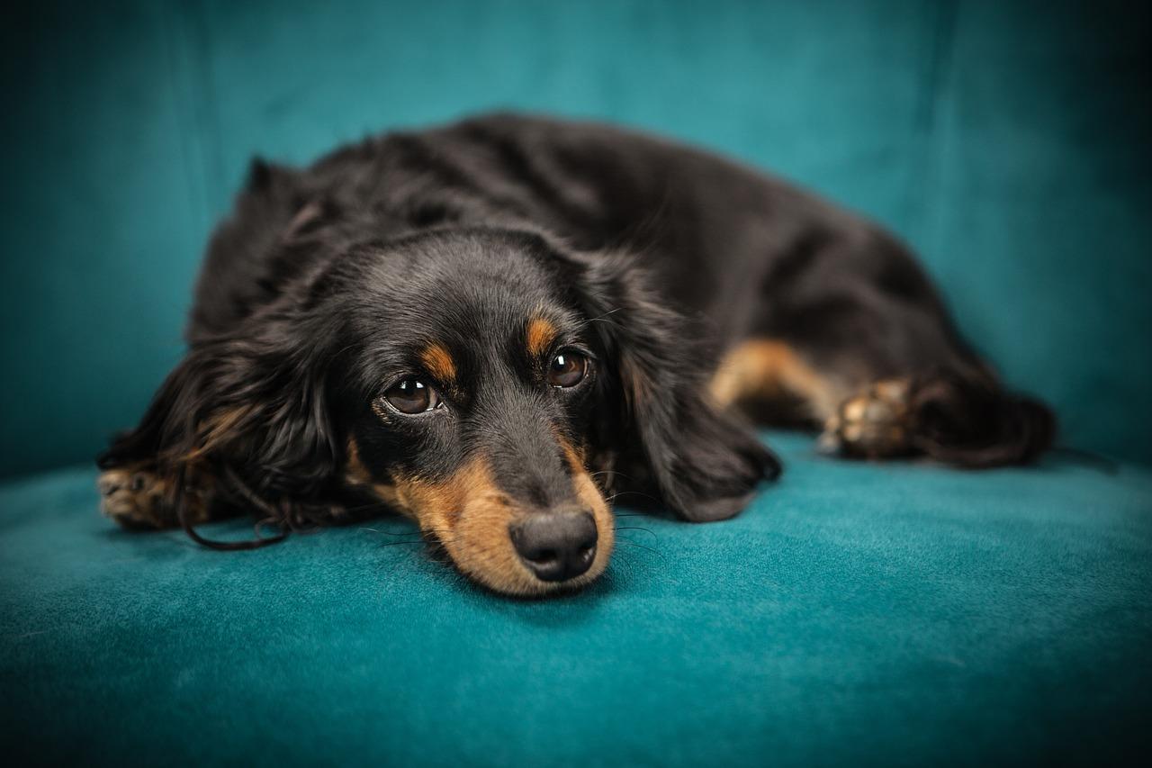 Couch Sofa Stoff Bezug Reinigung Hund