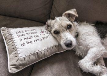 Hund- & Katzenurin in Polster reinigen | Sofa / Couch säubern
