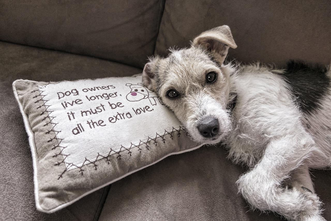 Hund Haustier Kissen Sofa Couch Polster Polstermöbel