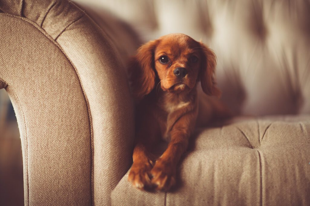 Sofa Couch Polster Haustier Hund Geruch