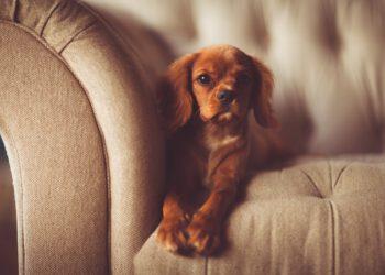 Geruch in Couch reinigen (Tipps) | Polster von Sofa stinkt